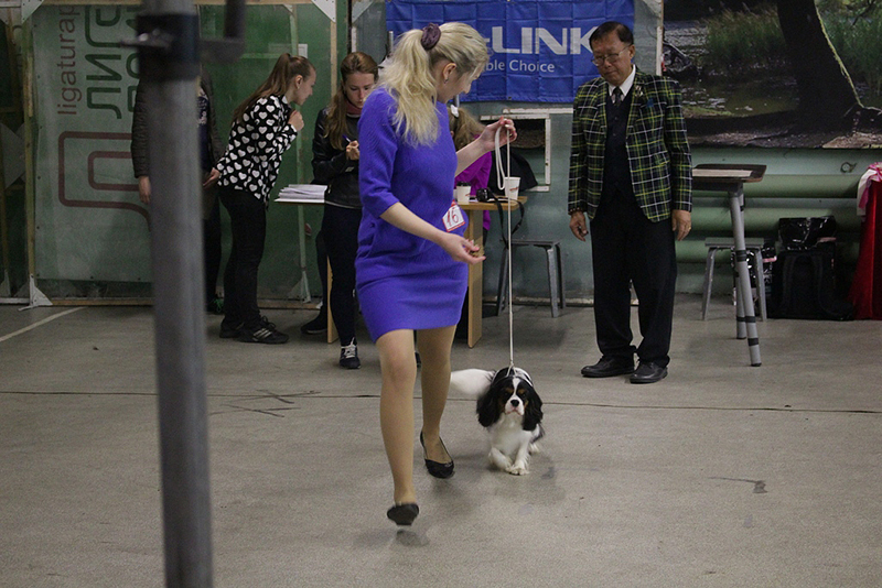 Results of Cavalier King Charles Spaniel & King Charles Spaniel Show